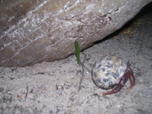 instincts of the hermit crab
